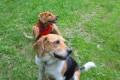 DOG REPORTER per un giorno: PABLO & PEDRO