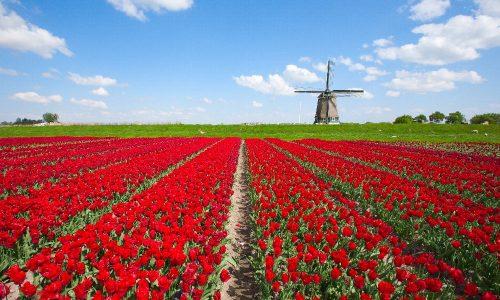 Amsterdam e i suoi fiori
